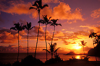 Palm trees at sunset, Hana, Maui, Hawaii, USA.