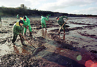 Pictured: Workers trying to de-pollute one of the beaches in Pembrokeshire after the Sea Empress run aground<br /> Re: The Sea Empress oil spill occurred at the entrance to the Milford Haven Waterway in Pembrokeshire, Wales on 15th February 1996 which was followed up by a clean up operation has begun