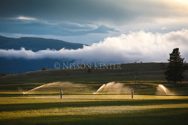 An irrigated field in northern Montana with low clouds and sunshine