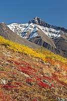 Autumn colors decorate the tundra in the Brooks Range mountains, Arctic, Alaska.