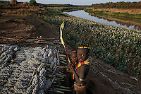 The thick black earth that gets deposited in a flood can be home to two or three crop rotations before there is another flood.  The amount of water contained in this muck after a flood could not be duplicated with irrigation...They are harvesting sorghum in the Karo village called Labuk.  Karo are sedentary agriculturists that do flood recession agriculture on the banks of the Omo...