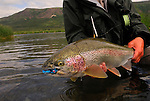 Handheld rainbow trout with fly