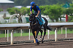 SHA TIN,HONG KONG-APRIL 29: Bow Creek ,trained by John O'Shea,exercises in preparation for the Champions Mile at Sha Tin Racecourse on April 29,2016 in Sha Tin,New Territories,Hong Kong (Photo by Kaz Ishida/Eclipse Sportswire/Getty Images)