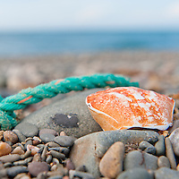 Empty crab shell and blue rope on the beach, Isle of Man.