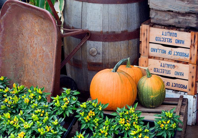 Fall display at Al's Garden nursery, Oregon