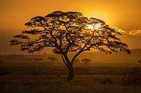 Sunset over the Serengeti. Classic.