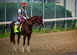 April 30, 2014: California Chrome with exercise rider Willy Delgado gallops in preparation for the Kentucky Derby at Churchill Downs in Louisville Ky. Alex Evers/ESW/CSM