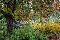 Bench in Denver Botanic Garden