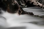 Tumbling water over roots in high-mountain stream showing motion blur. Nordtirol, Tirol, Austrian Alps, Austria, 2300 metres, July.