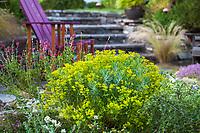 Chartreuse flower Euphorbia 'Copton Ash' (Spurge) flowering in Shelagh Tucker garden, Seattle, Washington