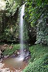 Crystal Shower Falls - Dorrigo NP