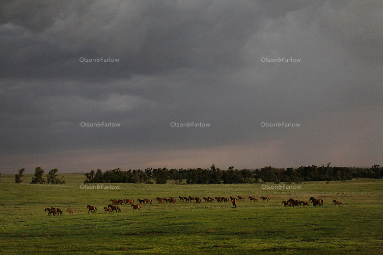 In 1900 there were 20 million mustangs that roamed the American West.  Today there are less than 30,000. <br />