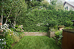 An evergreen hedge, mixed planting beds and stacked stone wall border the lawn area in this private Seattle backyard.