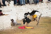 Peru: Condor vs. Bull by Karla Gachet & Ivan Kashinsky