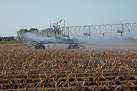 Irrigating potatoes ahead of lifting - Lincolnshire, September