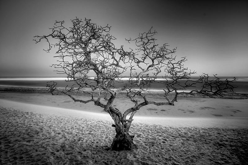 Dead tree. Hookaipa Beach. Maui, Hawaii