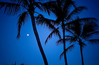 Moon rising under sillouetted palm trees.