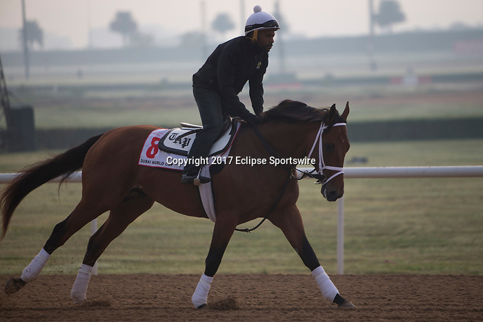DUBAI,UNITED ARAB EMIRATES-MARCH 23: Keen Ice,trained by Todd Pletcher,exercises in preparation for the Dubai World Cup at Meydan Racecourse on March 23,2017 in Dubai,United Arab Emirates (Photo by Kaz Ishida/Eclipse Sportswire/Getty Images)