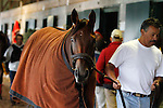 October 26, 2015:  Beholder walking the barn after her final work for the Breeder's Cup Classic.  Beholder, trained by Richard Mandella, and owned by B. Wayne Hughes, cross entered in the Breeder's Cup Classic Grade 1 $5,000,000, and the Breeder's Cup Distaff $2,000,000.  Candice Chavez/ESW/CSM