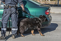 A customs officer with a dog checking a car.  Norwegian authorites introduced strict measures to combat the Coronavirus (COVID-19) in March 2020. This included closing the borders, and any Norwegians returning from abroad is given two weeks quarantine. <br /> <br /> Police and soldiers from the Home Guard of the Army (Heimevernet) man checkpoints along side roads and regular border crossings to enforce the travel restrictions.<br /> <br /> <br /> <br /> ©Fredrik Naumann/Felix Features