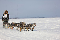 Musher Mike Santos heads out of Nome during the 2008 All Alaska Sweepstakes 100 year commemorative sled dog race.