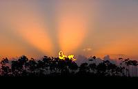 Sunrise over pines