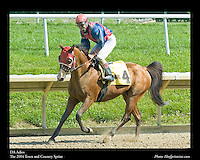 As seen in the Arabian Horse Galleries exhibit at The Kentucky Horse Park<br /> <br /> DA Adios  .The 2004 Town and Country Sprint