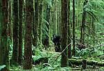 Cryptid bipedal primates, Washington