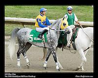 As seen in the Arabian Horse Galleries exhibit at The Kentucky Horse Park<br /> <br /> MD Blue Chip.The Mandolynn Hill Farm Handicap