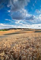 Clouds and wheat field. The Palouse, Washington