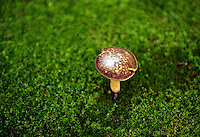 Mushroom and moss.