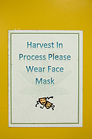 "A sign reads ""Harvest in process please wear face mask"" on a door at the production and packaging facility for Garden Remedies, a medical cannabis producer, in Fitchburg, Massachusetts, USA, on Fri., Feb. 22, 2019."