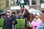 15 April 2011.  #8 Furthest Land in the paddock prior to running 6th in the Makers Mark Mile.