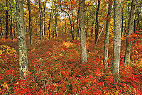 Autumn Landscape, Woodland Township, New Jersey