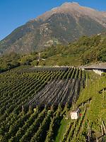 Hasenöhrl, Apfelanbau Oberplars, Algund bei Meran, Region Südtirol-Bozen, Italien, Europa<br /> peak Hasenöhrl, apple growing, Oberplars, Lagundo near Merano, Region South Tyrol-Bolzano, Italy, Europe