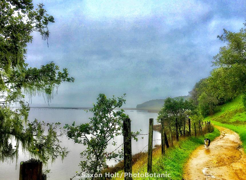 Kona on morning walk, Rush Creek Open Space Preserve after February rain