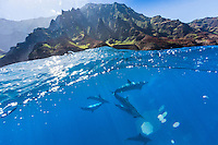 Spinner dolphins swim off the Na Pali Coast of Kaua'i.