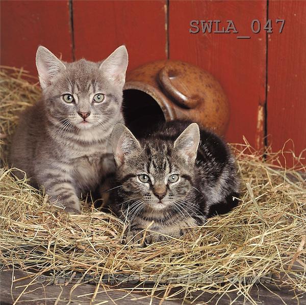 Carl, ANIMALS, photos(SWLA047,#A#) Katzen, gatos
