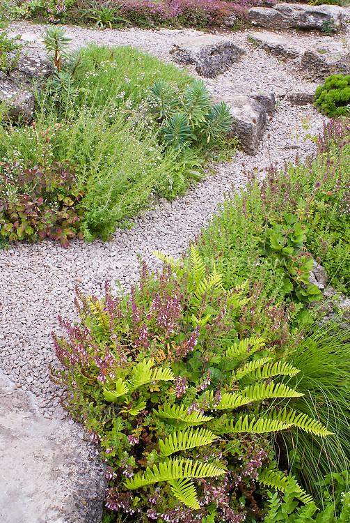 Ferns, stone pebble path walkway rock garden plants