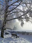 Germany, Bavaria, Upper Bavaria, Winter in Werdenfelser Land: winter scenery at Kochel Lake