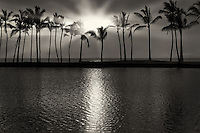 Palm trees and sunset. Hawaii, The Big Island