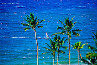 A windsurfer cuts through the brilliant blue sea at Wailea beach with palm trees in the foreground.
