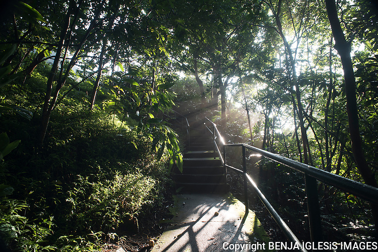 Morning sun rays going through the vegetation at the Iao Valley state park trail.