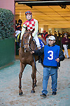 21 February 2009: Palanka City with jockey Chris Emigh emerge from the paddock before winning the Spring Fever stakes race at Oaklawn in Hot Springs, Arkansas