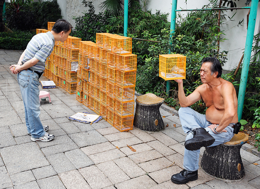 Man looking at songbirds in bird cage for sale in Yuen Po Street Bird Garden, Kowloon, Hong Kong SAR, People's Repbulic of China, Asia