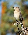 Bird sitting on a branch in El Centro, California