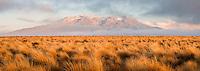 Sunrise over Mount Ruapehu and tussock fields of Rangipo Desert, Tongariro National Park, Central Plateau, North Island, UNESCO World Heritage Area, New Zealand, NZ