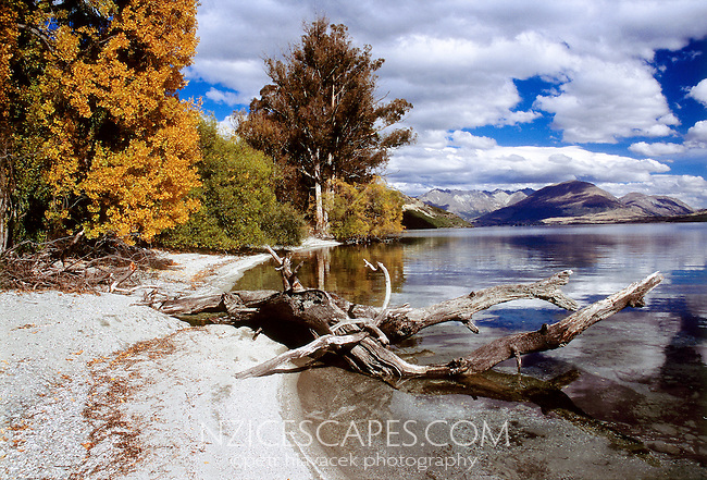 Lakeshore of the Lake Wakatipu near Queenstown in autumn colours - Otago