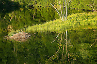 Summer reflection and beaver lodge on Wilbur Lake (TVA), Cherokee National Forest