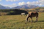Horses grazing in front of Wilson Peak, San Juan Mountains near Telluride, Colorado, USA.